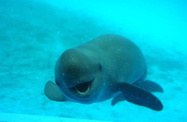 Yangtze Finless Porpoise Habitat